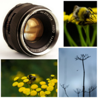Camera lens review: Auto Yashinon-DX 50mm/1.7 M42