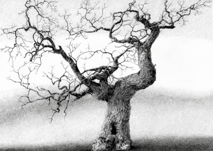 Inkdrawing of a tree